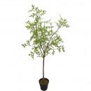 groothandel Kunstbloemen: Spring boom  ingemaakt, H86cm, groen